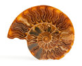 Fossils:Cepholopoda, Sliced Ammonite Half. Cleoniceras sp.. Cretaceous.Madagascar. 7.79 x 6.61 x 0.72 inches (19.80 x 16.80 x1.85...