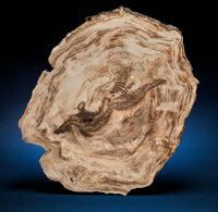 Sweethome Slab Cedar Lower Oligocene, Mahama Volcanics Formation Sweet H