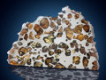 Meteorites:Palasites, Esquel - Large Partial Slice of one of the Most BeautifulMeteorites in the World . Pallasite - PAL. Chubut,Argentina...