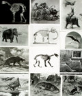 Books:Prints & Leaves, [Prehistoric Animals]. Archive of Approximately 60 Photographs andImages Relating to Prehistoric Animals. ...