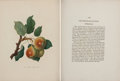 Books:Color-Plate Books, [Color-Plate Books]. Thomas Andrew Knight. PomonaHerefordiensis; Containing Coloured Engravings of the OldCider ...