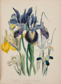 Books:Natural History Books & Prints, Mrs. [Jane Webb] Loudon. The Ladies' Flower-Garden of Ornamental Bulbous Plants. London: William Smith, 1841....