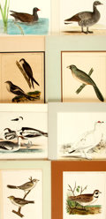 Books:Prints & Leaves, [Ornithology]. Group of Eight Color Plates of Birds. Variouspublishers and dates....
