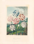 Books:Color-Plate Books, Robert Thornton. Temple of Flora, or Garden of the Botanist, Poet, Painter and Philosopher. London: Thornton, 1812. ...