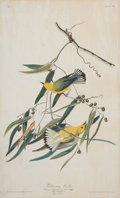 Books:Prints & Leaves, John James Audubon (1785-1851). Prothonotary Warbler- Plate III (Havell Edition). A beautiful hand-colo...