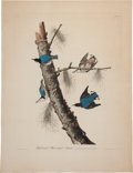 Books:Prints & Leaves, John James Audubon (1785-1851). White-breasted Black-cappedNuthatch - Plate CLII (Havell Edition). A be...