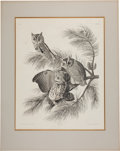 Books:Prints & Leaves, John James Audubon (1785-1851). Mottled Owl - Plate 97(Havell Edition). An attractive uncolored example of this...