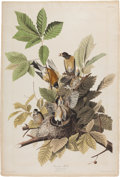 Books:Prints & Leaves, John James Audubon (1785-1851). American Robin - Plate CXXXI(Havell Edition). A beautiful hand-colored aquatint...