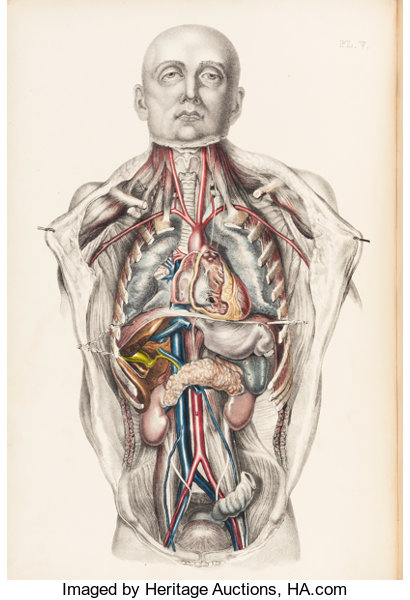 Anatomy]. Francis Sibson. Medical Anatomy: or, Illustrations | Lot ...