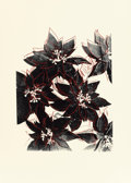 Post-War & Contemporary:Pop, Andy Warhol (American, 1928-1987). Poinsettias (F & S IIIA. 51), 1983. Unique screenprint on Saunders Waterfod (Hot Pres...