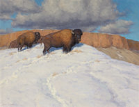 SCOTT YEAGER (American, b. 1965) Canyon Buffalo Oil on canvas 24 x 30 inches (61.0 x 76.2 cm)