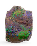 Fossils:Cepholopoda, Ammolite Fossil. Placenticeras sp.. Cretaceous, BearpawFormation. Southern Alberta, Canada. 4.06 x 2.86 x 0.61 inches(10...