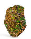 Fossils:Cepholopoda, Ammolite Fossil. Placenticeras sp.. Cretaceous. BearpawFormation. Southern Alberta, Canada. 2.11 x 1.42 x 0.33 inches(5....