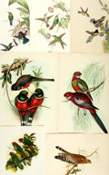 Books:Photography, [Ornithology]. Collection of Twelve Color Prints Depicting Various Bird Species. [N.p., n.d., circa 1970]. ...