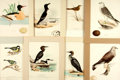 Books:Prints & Leaves, [Ornithology]. Group of Eight Nineteenth-Century Prints, Most withHand-Coloring. Various publisher's, Circa 1840.. ...