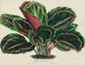 Fine Art - Work on Paper:Print, Louis van Houtte (Belgian, 1810-1876). Tropical Plants (six works). Offset lithograph in colors on paper, each. 9-1/2 x ... (Total: 6 Items)