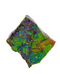 Fossils:Cepholopoda, Ammolite Fossil. Placenticeras sp.. Cretaceous. BearpawFormation. Southern Alberta, Canada. 1.55 x 1.32 x 0.51 inches(3....