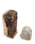 Fossils:Dinosauria, Dinosaur Bones. Locality Unknown. 6.50 x 3.69 x 2.43inches (16.50 x 9.38 x 6.18 cm). ... (Total: 2 Items)
