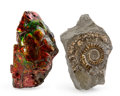 Fossils:Cepholopoda, Ammonite and Ammolite Set. Various Varieties and Localities.3.72 x 2.41 x 0.87 inches (9.44 x 6.11 x 2.21 cm). ... (Total:2 Items)