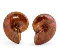 Fossils:Cepholopoda, Ammonite Pair. Cleoniceras cleon. Cretaceous.Madagascar. 3.21 x 2.43 x 0.95 inches (8.15 x 6.18 x 2.42cm)... (Total: 2 Items)