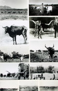 Books:Prints & Leaves, [Cattle]. Archive of Approximately Seventy Photographs Depictingthe Cattle Industry....