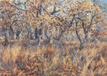 Fine Art - Painting, American:Contemporary   (1950 to present)  , Herb Booth (American, b. 1942). Deer in Forest. Watercoloron paper. 28-1/2 x 40-1/2 inches (72.4 x 102.9 cm) (sight). S...
