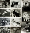 Books:Prints & Leaves, [Animals & Fish]. Archive of Approximately 123 PhotographsRelating to Various Animal and Aquatic Life. ...