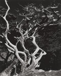 Photographs, Edward Weston (American, 1886-1958). Point Lobos, 1938. Gelatin silver. 9-1/2 x 7-1/2 inches (24.1 x 19.1 cm). Initialed...
