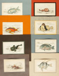 Books:Prints & Leaves, [Ichthyology]. Group of Twelve Hand-Colored Engravings DepictingFish and Eels. [N.p., Circa 1840]....
