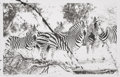 Photographs:20th Century, Conor McCreedy (South African, b. 1987). Zebra, 2010.Lithograph with acrylic on paper. 21-3/4 x 34 inches (55.2 x 86.4...