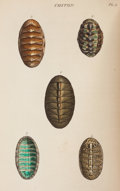 Books:Color-Plate Books, [Color-Plate Books]. W[illiam] Wood. General Conchology. London: Booth, 1815. First edition, volume I (all published...