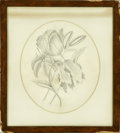 Fine Art - Painting, American:Modern  (1900 1949)  , MARGARET VAN DYCK. Lilies, c.1900. Pencil on paper. 13 x 11in.(oval). Unsigned. Inscribed verso: Property of Mrs.Charles...