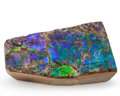 Fossils:Cepholopoda, Ammolite Fossil. Placenticeras sp.. Cretaceous, BearpawFormation. Southern Alberta, Canada. 3.29 x 1.78 x 0.77 inches(8....