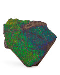 Fossils:Cepholopoda, Ammolite Fossil. Placenticeras sp.. Cretaceous, BearpawFormation. Southern Alberta, Canada. 1.79 x 1.44 x.09...