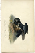 Antiques:Posters & Prints, Black Vulture Audubon Royal Octavo Print. Two Black Vultures arethe focus of plate number 3. The two vultures, as they feed...