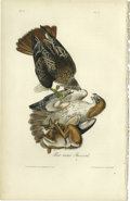 Antiques:Posters & Prints, Red-tailed Buzzard Audubon Royal Octavo Print. Plate number 7depicts two Red-tailed Buzzards as they attack a small dead ...