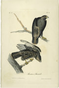 Antiques:Posters & Prints, Harlan's Buzzard Audubon Royal Octavo Print. Plate number 8headlines Harlan's Buzzard. Two buzzards are shown perched on ...
