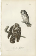 Antiques:Posters & Prints, Tengmalm's Night-Owl Audubon Royal Octavo Print. Plate number 32has two spectacular renderings of Tengmalm's Night Owl bo...