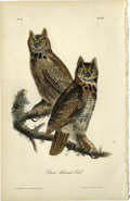 Antiques:Posters & Prints, Great Horned-Owl Audubon Royal Octavo Print. A male and femaleGreat Horned-Owl are the highlight of plate number 39. They...