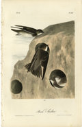 Antiques:Posters & Prints, Bank Swallow Audubon Royal Octavo Print. A wonderful drawing ofBank Swallows and their nesting area is the focus of plate...
