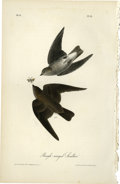 Antiques:Posters & Prints, Rough-winged Swallow Audubon Royal Octavo Print. Plate number 51features two Rough-winged Swallows pursuing a bug for din...
