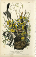 Antiques:Posters & Prints, Common Mockingbird Audubon Royal Octavo Print. Plate number 138headlines the Mockingbird! Two males and one female are dr...