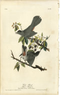 Antiques:Posters & Prints, Cat Bird Royal Audubon Octavo Print. Plate number 140 features theCat Bird. Both the male and female are depicted as they...