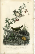 Antiques:Posters & Prints, Golden Crowned Wagtail Audubon Royal Octavo Print. Plate number 148depicts the Golden Crowned Wagtail male and female as ...