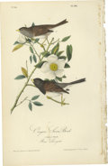 Antiques:Posters & Prints, Oregon Snow Bird Audubon Royal Octavo Print. Plate number 168features the Oregon Snow Bird. A male and female are shown s...