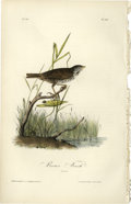 Antiques:Posters & Prints, Brown Finch Audubon Royal Octavo Print. Plate number 187 depicts the Brown Finch female perched on a branch near a small b...