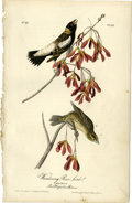 Antiques:Posters & Prints, Wandering Rice Bird Audubon Royal Octavo Print. Plate number 211features the male and female of the species; both are perch...