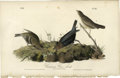 Antiques:Posters & Prints, Common Cow-Bird Audubon Royal Octavo Print. Plate number 212features the Common Cow-Bird. A male, female, and baby are pict...