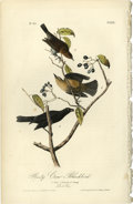 Antiques:Posters & Prints, Rusty Crow-Blackbird Audubon Royal Octavo Print. Plate number 222shows the male, female, and offspring of the Rusty Crow al...