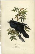 Antiques:Posters & Prints, Raven Audubon Royal Octavo Print. Plate number 224 features the Raven. An old male, looking very agitated, is pictured seate...